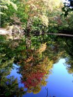 Fall Pictures 39 by FairieGoodMother