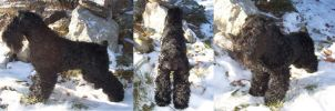 Black Russian Terrier Doll by cermaith