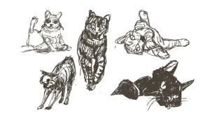 Animal Sketches 2: Cats by hippybro