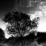 Reflections 2 by OlivierLD
