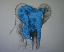 COMMISSION OF A BABY ELEPHANT by LouiseMcNaught