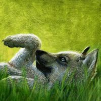 Grey Wolf Colored Pencil by JustMarDesign