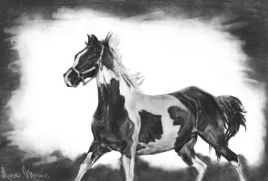 Pinto Horse by NicoleRylie