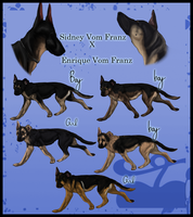 CLOSED- GSD Litter by Angye98