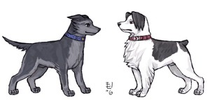 Ace dogs by emlan