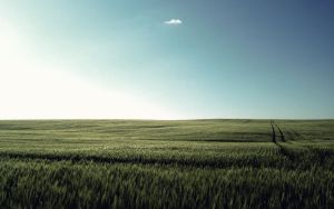 Wheat Field by PhK-Dan10