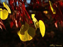 Signs of autumn 3 by ShlomitMessica