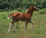 Warmblood Filly 3 .:Stock:. by Photopolis