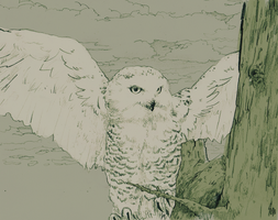 Snow Owl proper colors by pineapplemike