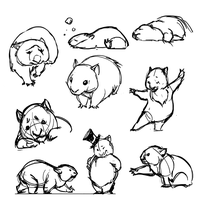 WOMBATS by ancalinar