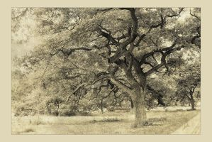 oak by greenfeed
