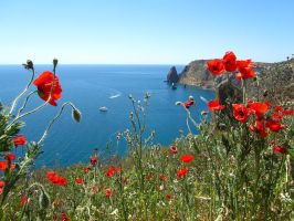 poppies at Cape Fiolent by Mari-Ghostly