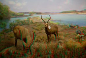 Stereoscopic Antelope by dvreflex