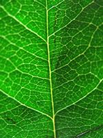 Green Veins by looking-for-hope