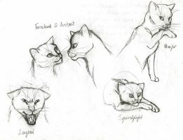 Warriors Medley II by Bronze100