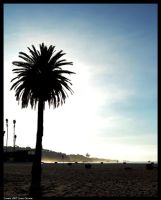 Lone Palm by CaspersCreations