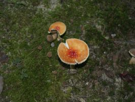 mushroom from above by Irie-Stock