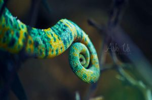 Chameleon tail by Arkus83