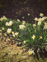 Flowers of the season. by CindyLouWhoXox