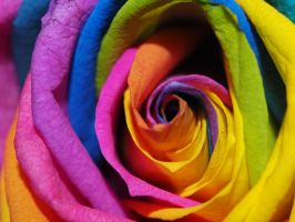 Rainbow Roses I by Squiddgee7734