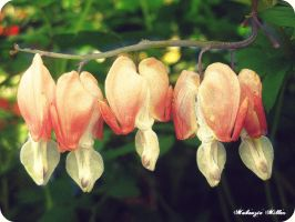 Bleeding hearts II by SweetSurrender13