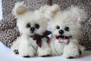 White fidget puppies Alex and Chandler by Matlyak