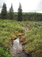 Creek in the Wilderness 2 by prints-of-stock