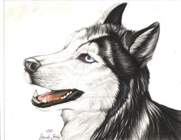 .:Husky Portrait:. by FallenAngelWolf13
