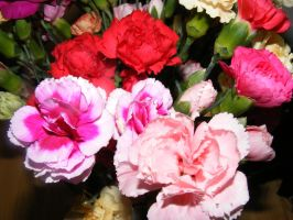 Colorful Carnations 03 by BlueIvyViolet
