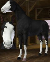 Sims 3 Horse Marking Download: SplashWhiteSet1 by Isolated-Design