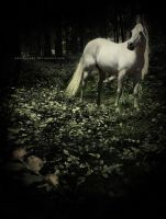 they call her desolation by whiskeyone