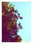 Blue Sky and Trees's Leaves 01 by Vianto
