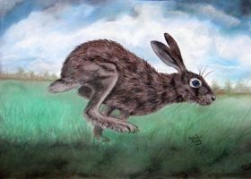 blue eyed Hare by ADRIANSportraits