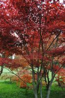 Red Trees by JuliaFox90