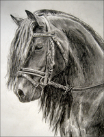 Horse Portrait by Jezarae