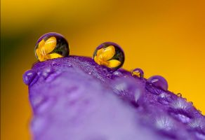 Flower Petal Refraction by Alliec