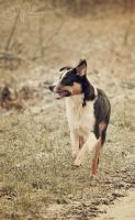 vintage dogs 04 by jpoker86