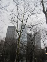 NYC Trees 1 by r-a-i-n-y
