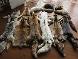 My pelt collection by WolfRoad