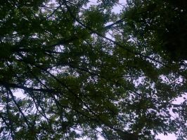 The Trees and Me - Garden - 2012-37 by Kay-March