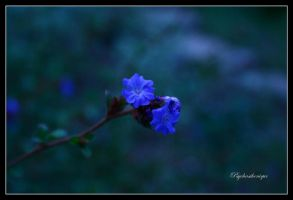 Find me in a blue dream... by Psychasthenique