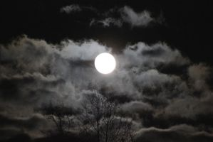 Tennessee Moonlit Night - April 2014 by CrystalMarineGallery
