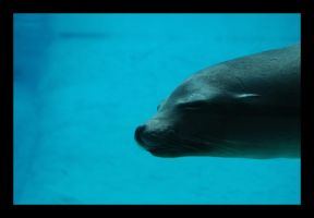 Faces at the Zoo: Sea Lion by Galanos-Orizontas