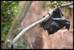 Flying Fox by Lionheart89