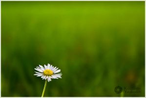 Little Happiness by Augenlicht