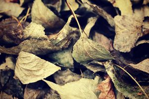 Fallen Leaves by llllollll