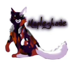 Mapleshade by Warrior-Wolftail