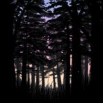 Firefly Forest (animated GIF) by soyrwoo