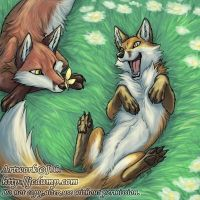 Playful foxes by J-C