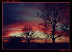 Sunset sinking behind trees by small-onion